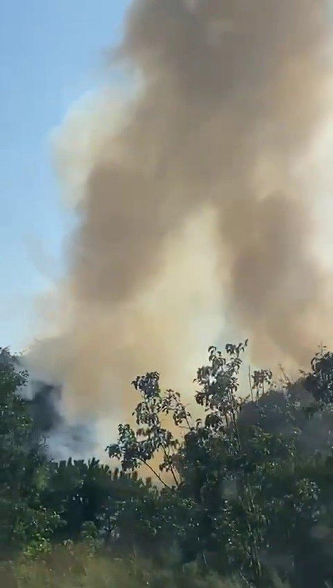 Altunizade'de ağaçlık alanda çıkan yangın söndürüldü #6