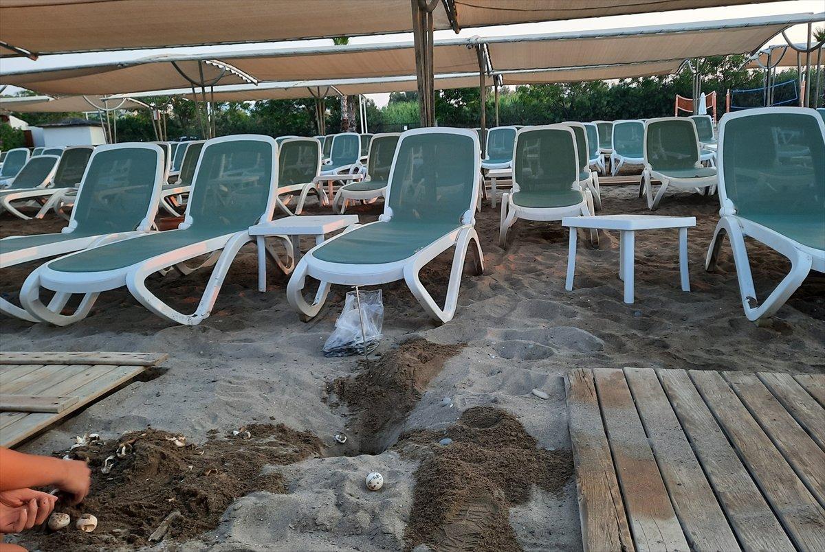 Antalya da caretta carettaların ölümüne neden olan iki otele ceza #1