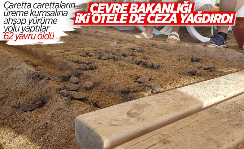 Antalya'da caretta carettaların ölümüne neden olan iki otele ceza