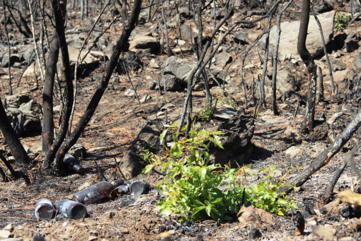 Bodrum'daki yangının ardından doğa kendini onarmaya başladı #1