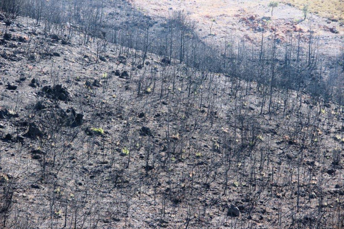 Bodrum'daki yangının ardından doğa kendini onarmaya başladı #4