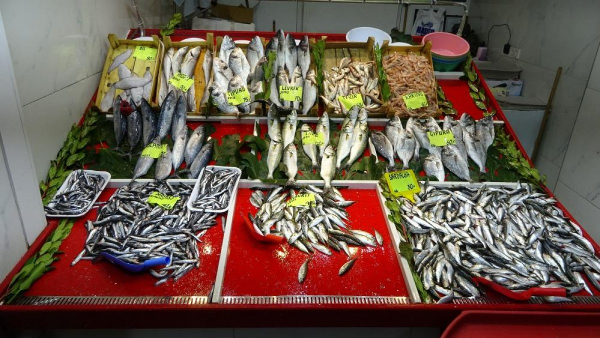 Çanakkale'de tezgahlarda lüfer bolluğu yaşanıyor #5