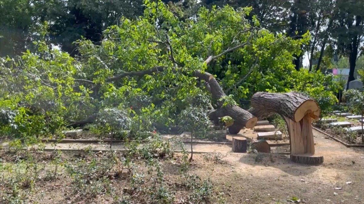 Edirnekapı Şehitliği'ndeki ağaç kesimi tepki topladı #1
