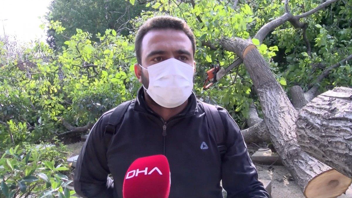 Edirnekapı Şehitliği'ndeki ağaç kesimi tepki topladı #9