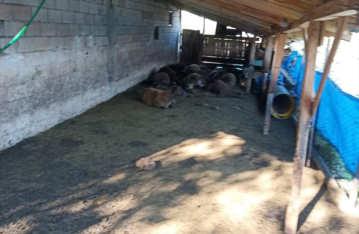 Erzurum da 40 koyun telef oldu #3