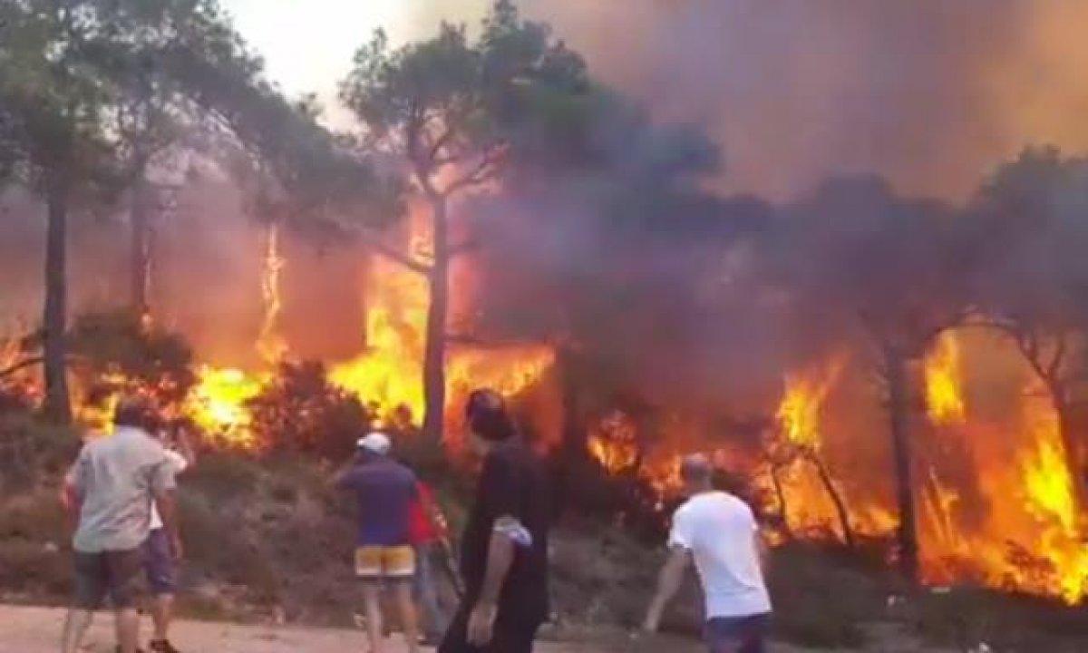 Heybeliada'da orman yangınına insan zinciri ile müdahale #1