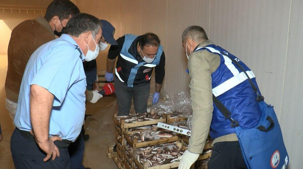 İstanbul da balık haline boy baskını #1