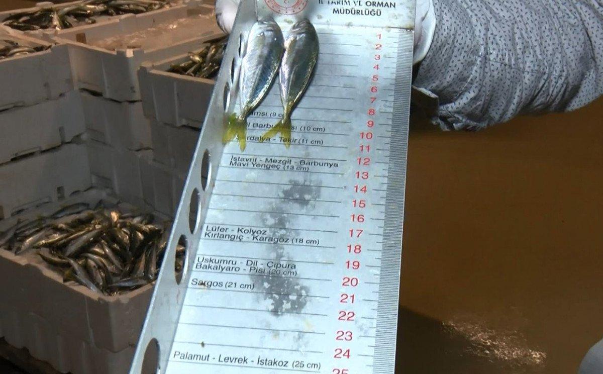 İstanbul da balık haline boy baskını #6