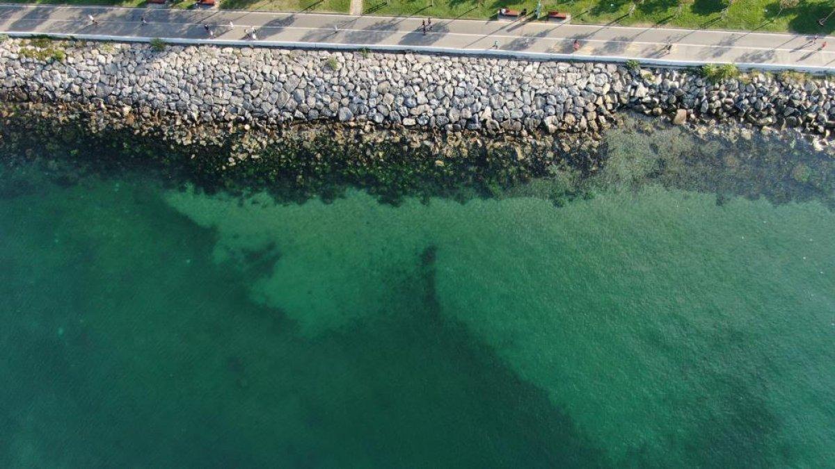 İstanbul sahillerinin müsilajdan arındığı gözlemlendi