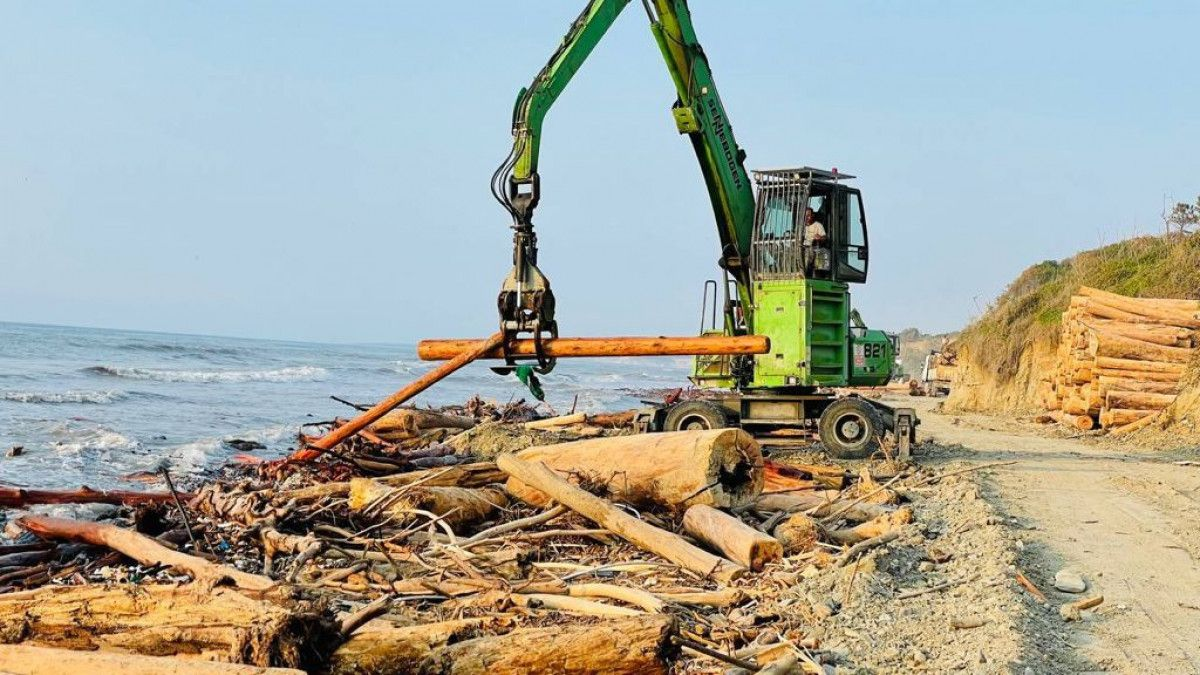 Karadeniz deki sel bölgesinde 90 bin tomruk toplandı #4