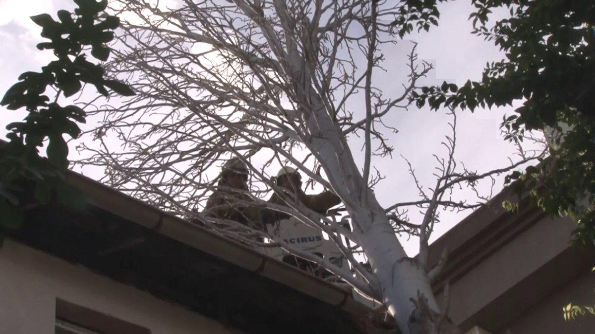 Maltepe'de evin çatısına ağaç düştü #2