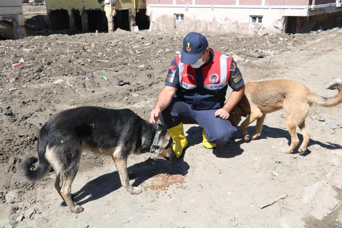 Mehmetçik, önce vatandaşlara sonra da sokak hayvanlarına yardım ediyor #1