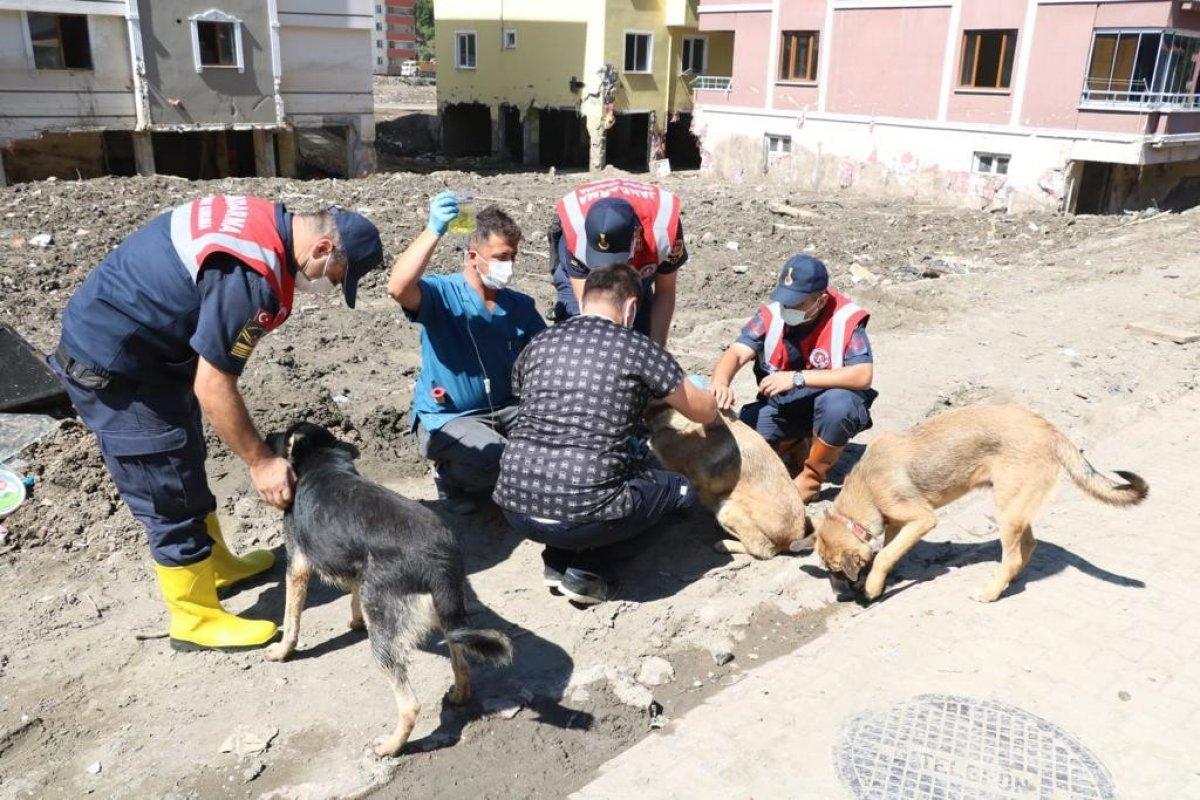 Mehmetçik, önce vatandaşlara sonra da sokak hayvanlarına yardım ediyor #2