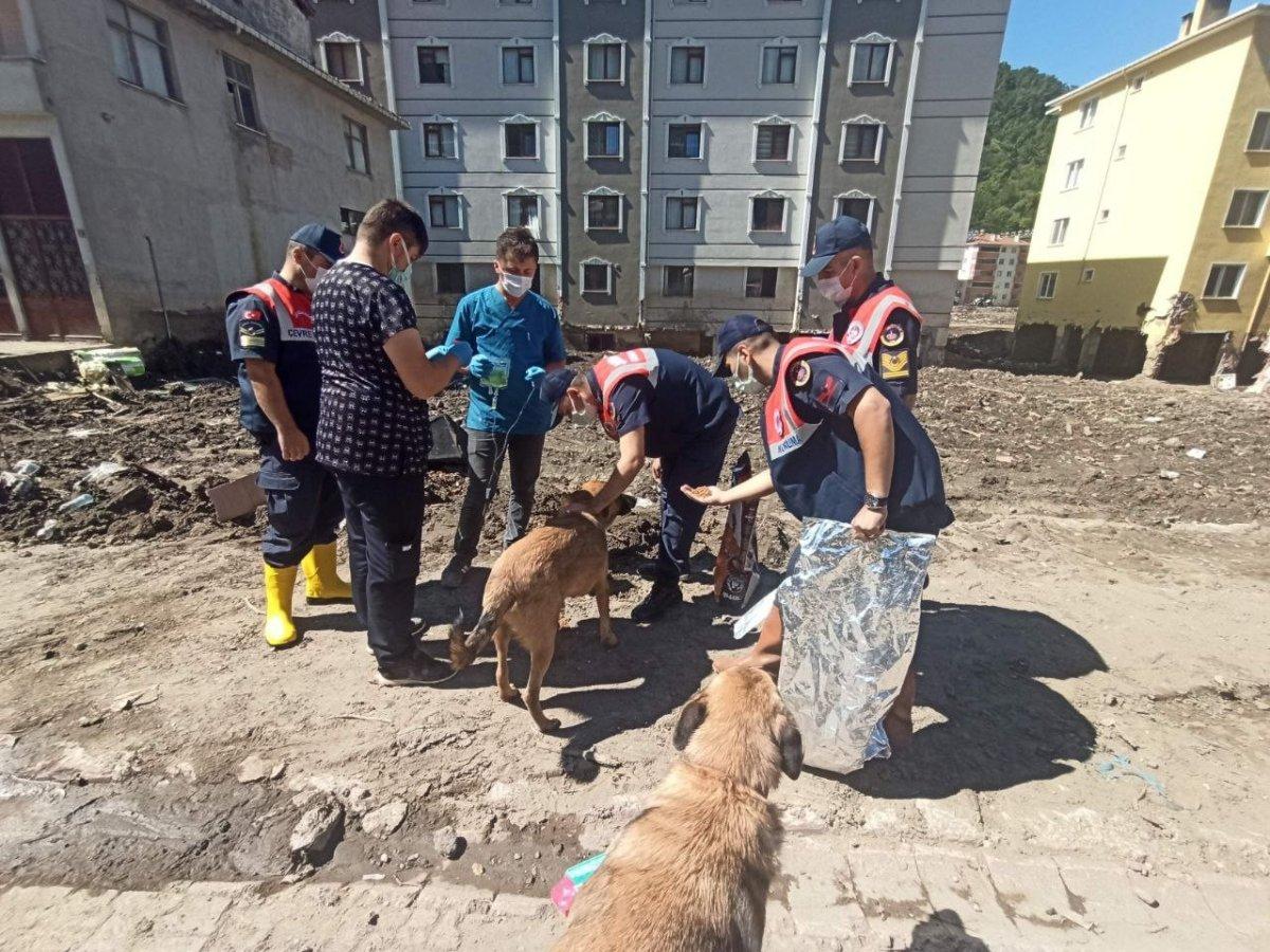 Mehmetçik, önce vatandaşlara sonra da sokak hayvanlarına yardım ediyor #3