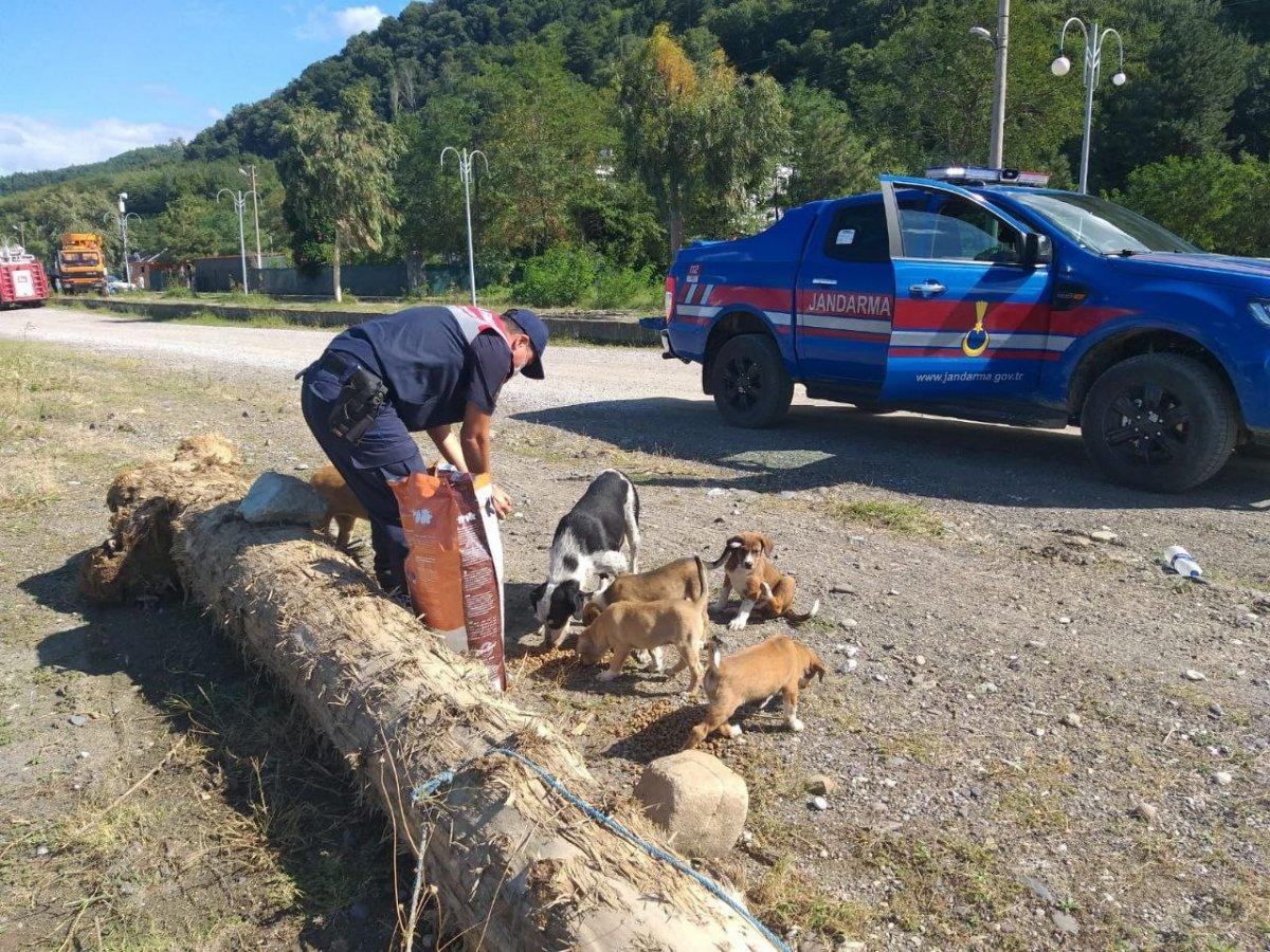 Mehmetçik, önce vatandaşlara sonra da sokak hayvanlarına yardım ediyor #4