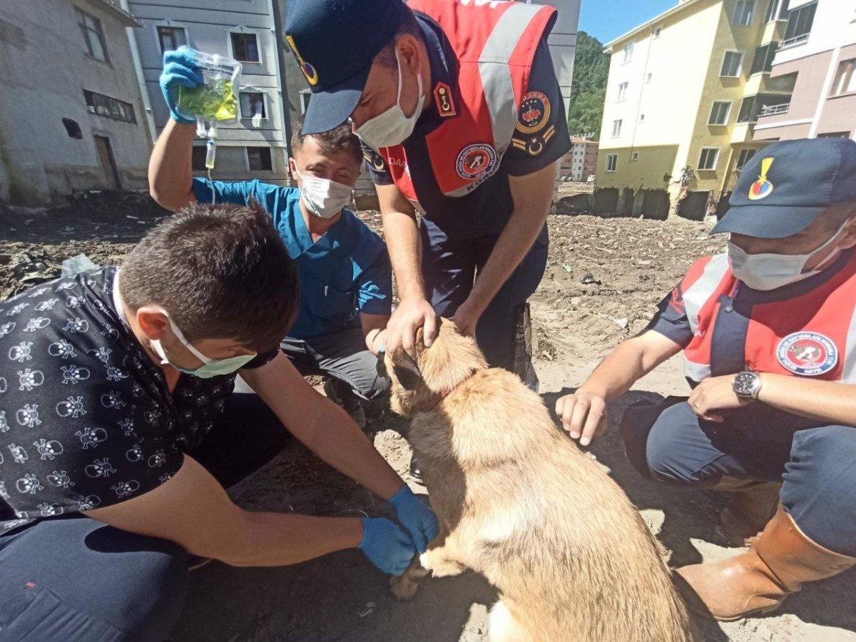 Mehmetçik, önce vatandaşlara sonra da sokak hayvanlarına yardım ediyor #5