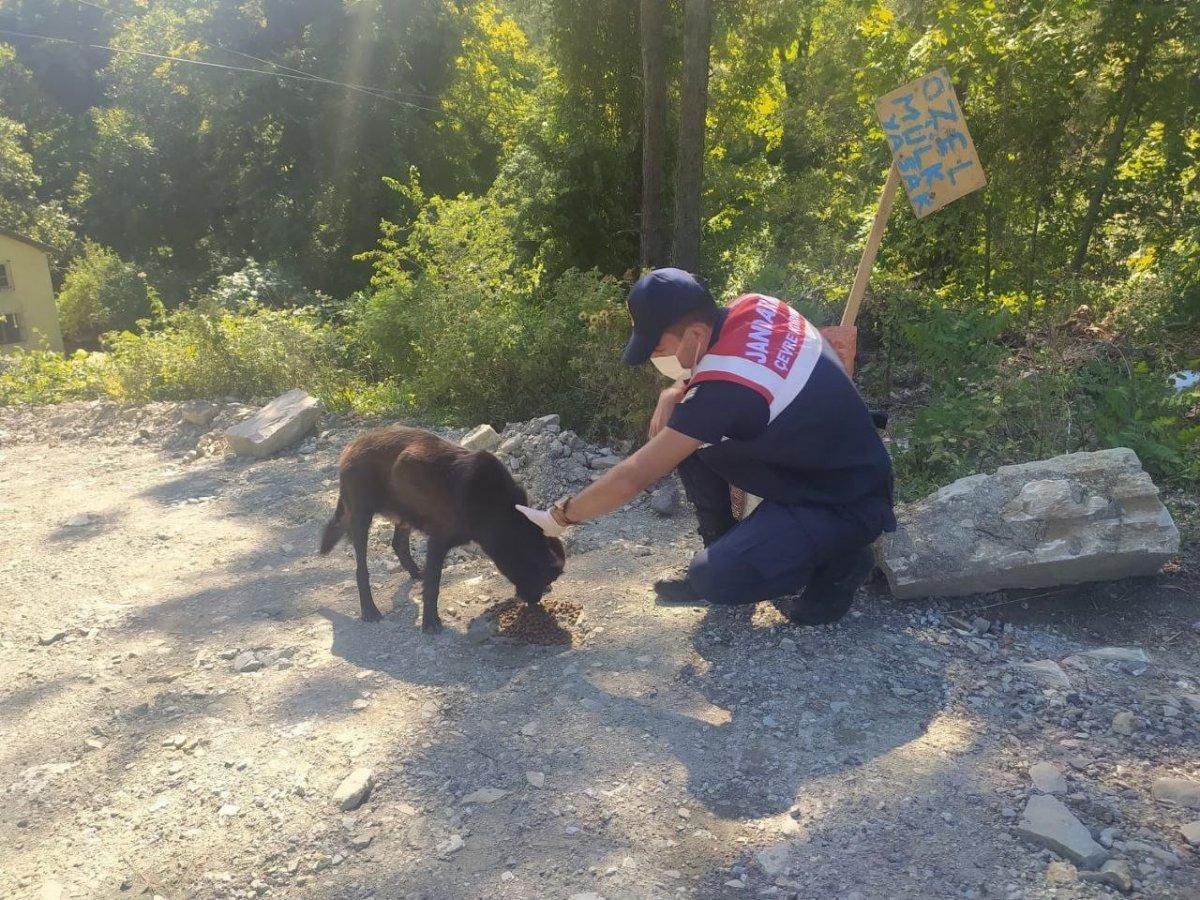 Mehmetçik, önce vatandaşlara sonra da sokak hayvanlarına yardım ediyor #6