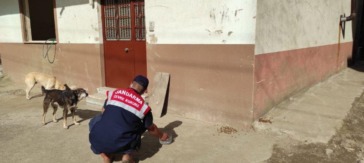Mehmetçik, önce vatandaşlara sonra da sokak hayvanlarına yardım ediyor #7