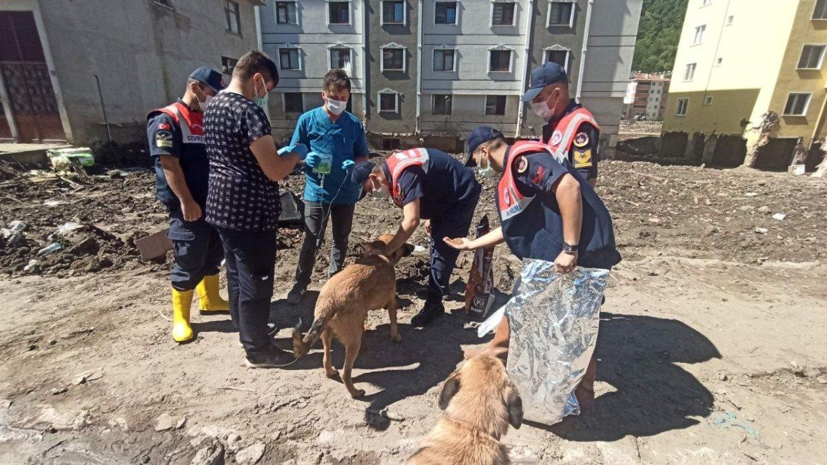 Mehmetçik, önce vatandaşlara sonra da sokak hayvanlarına yardım ediyor