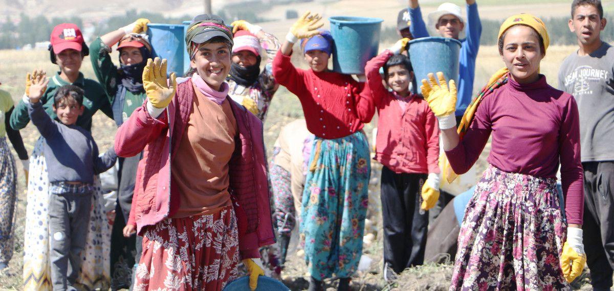 Okullar açıldı, Şanlıurfalı kız çocukları tarlaya gitti #4
