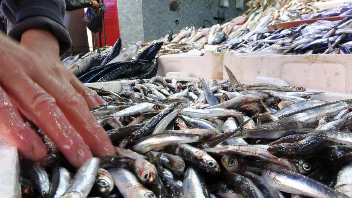Samsun da son zamanların en bereketli balık sezonu yaşanıyor #4