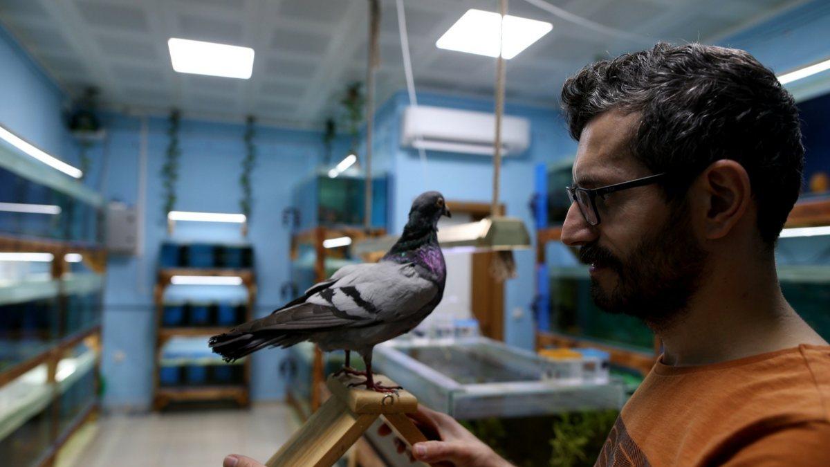 Bursa'da ölen posta güvercinini donduran hayvansever