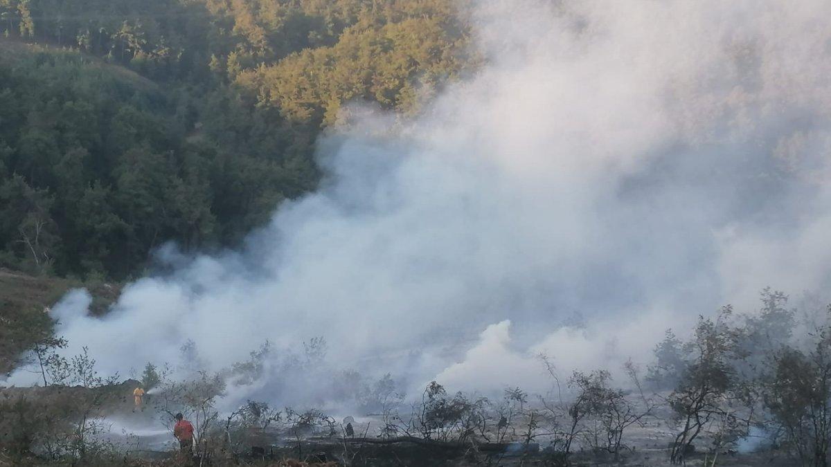 Bursada orman yangını meydana...